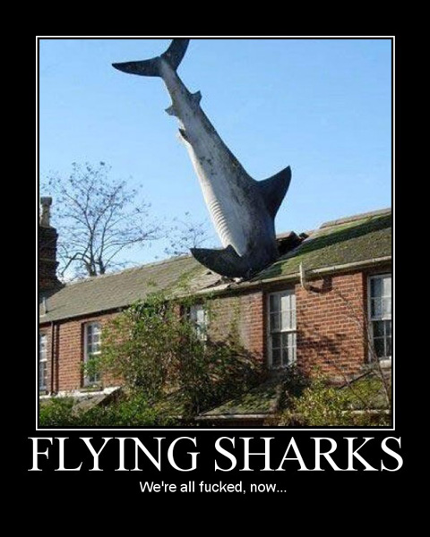 flying sharks Flying Sharks... Its all over.