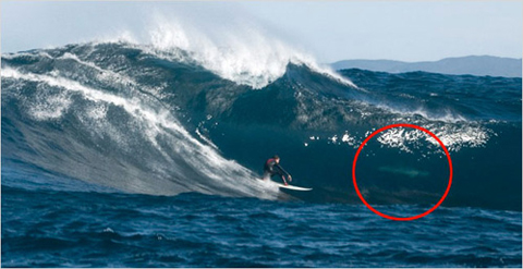 wave shark Getting Barrelled with a Great White
