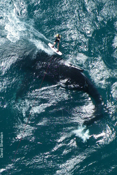 Kiting over a Whale