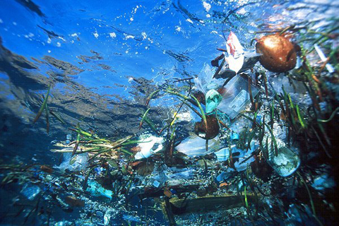 plasticocean Plastic is Killing the Oceans   More Plastic Than Plankton in the Pacific