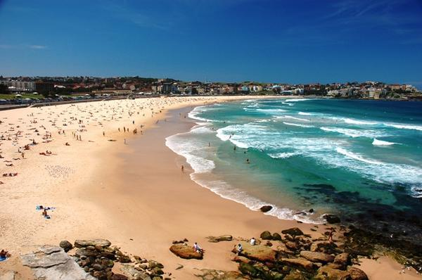 The First Shark Attack at Bondi Beach Since 1929
