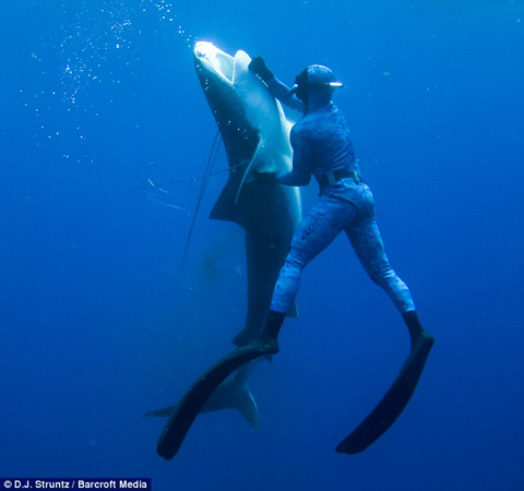 Craig Clasen uses his knife to kill a 12 ft. Tiger Shark