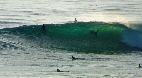 shark e1315181156272 Unbelievable   Shark Spotted in Wave with Surfers   Swamis   California